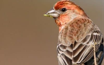 Staying Positive, Lessons From a Finch