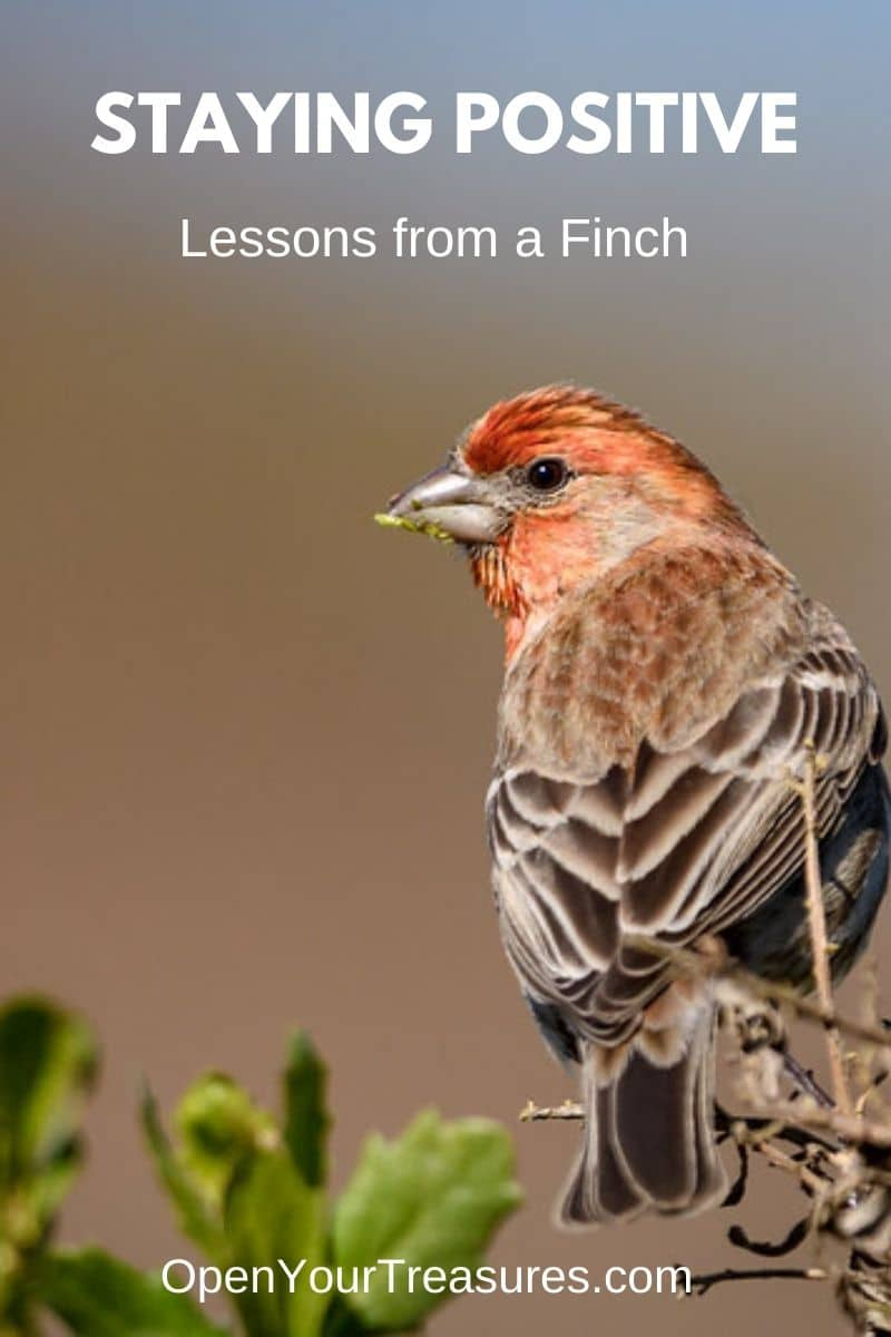 Staying positive, lessons learned from a finch